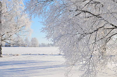 White Frost Art Print by Conny Sjostrom