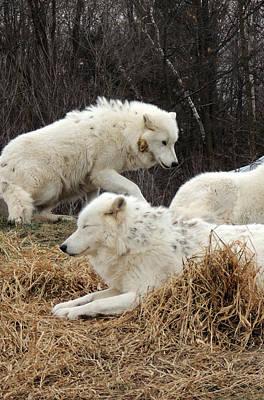 White Furs Original