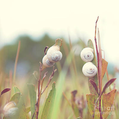Photograph - White Garden Snail by Yew Kwang