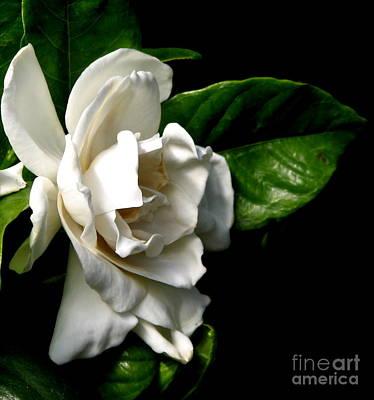 Art Print featuring the photograph White Gardenia by Rose Santuci-Sofranko