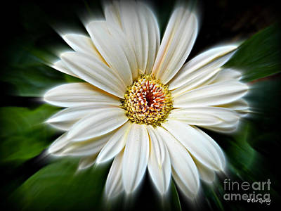 Photograph - White Gerber Daisy by Eve Spring