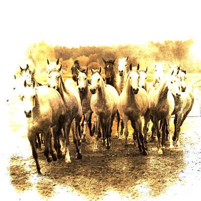 Grey Horse Digital Art - White Ghosts by Angel  Tarantella