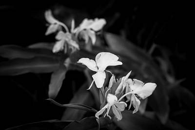 White Ginger Flowers H Coronarium Painted Bw   Art Print by Rich Franco