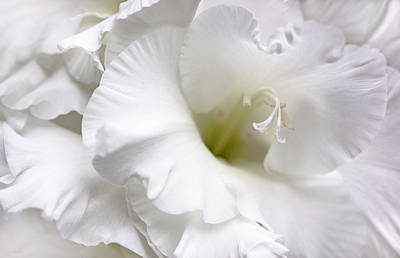 Photograph - White Gladiola Flower Brilliance by Jennie Marie Schell