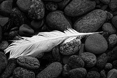 Photograph - White Gull Feather by Randall Nyhof