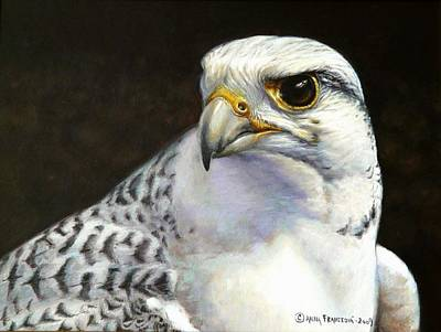 Wall Art - Painting - White Gyrfalcon by Anna Franceova