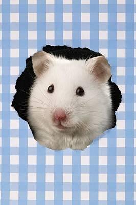 White Hamster Art Print