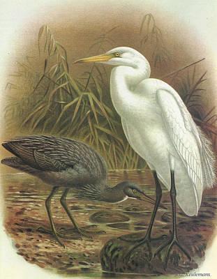 White Heron And Reef Heron Art Print