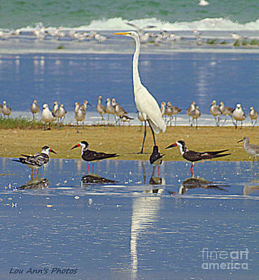 Photograph - White Heron And Sea Gulls by Lou Ann Bagnall