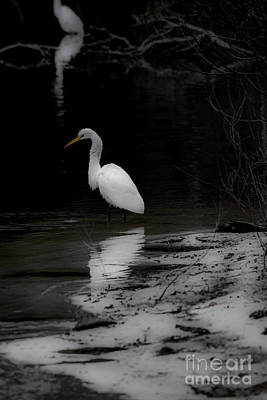Photograph - White Heron by Angela DeFrias