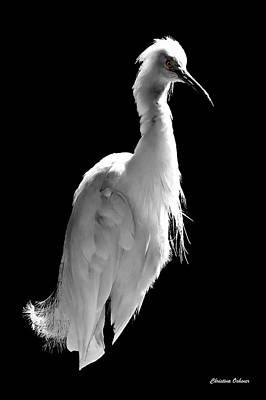 Christina Digital Art - White Heron by Christina Ochsner