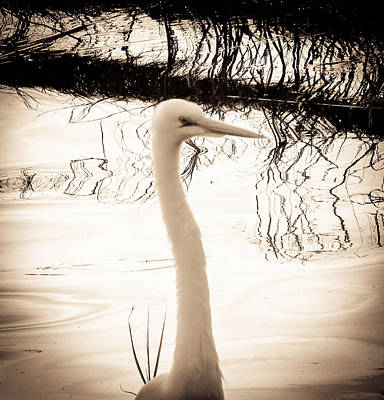 Photograph - White Heron Dream by Christy Usilton