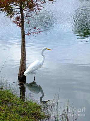 Photograph - White Heron Reflection by Bob Sample