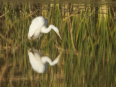 Photograph - White Heron Staring At The Water by Jean Noren