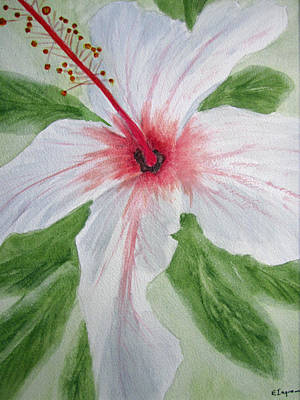 White Hibiscus Flower Art Print by Elvira Ingram