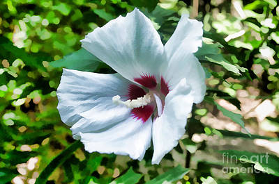 Photograph - White Hibiscus From Missouri Botanical Gardens by Luther Fine Art