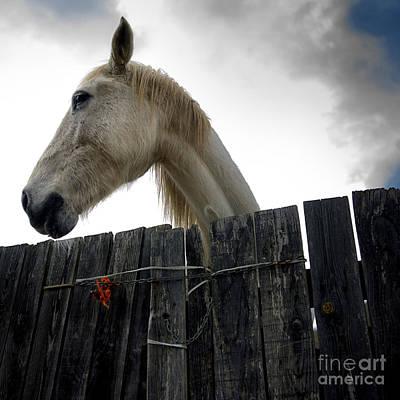 Gray Horse Photograph - White Horse by Bernard Jaubert