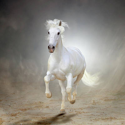 White Horse Galloping Art Print by Christiana Stawski