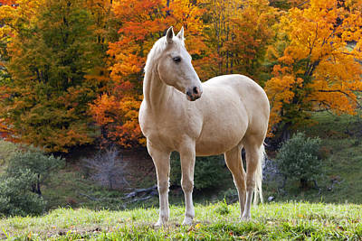 Photograph - White Horse In Autumn by Brian Jannsen