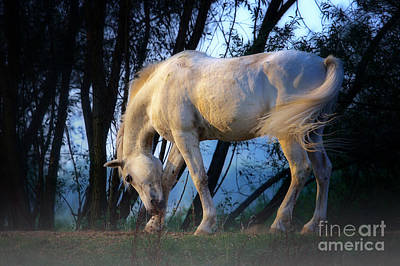 Art Print featuring the photograph White Horse In The Early Evening Mist by Nick  Biemans
