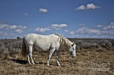 White Horse In The High Desert Art Print by Dave Gordon