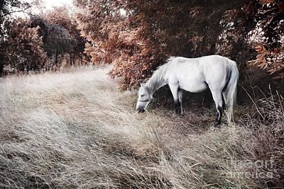 Photograph - White Horse by Jelena Jovanovic