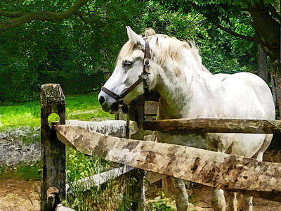Photograph - White Horse Looking Away by Susan Savad