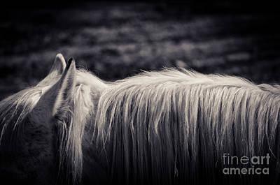 Photograph - White Horse Mane by Silvia Ganora