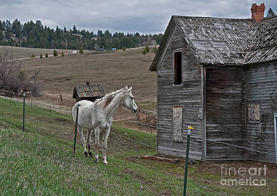 Photograph - White Horse Near Old Homestead Art Prints by Valerie Garner