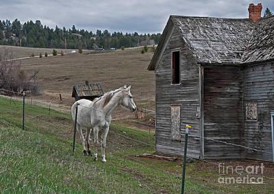 Photograph - White Horse Near Old Homestead Art Prints by Valerie Garner