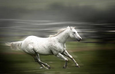 Photograph - White Horse Running by Patrick Boening