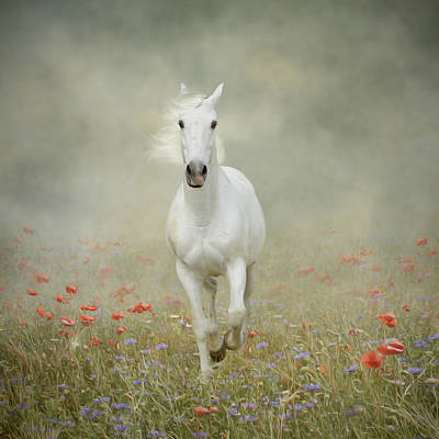 White Horse Running Through Poppies Art Print by Christiana Stawski