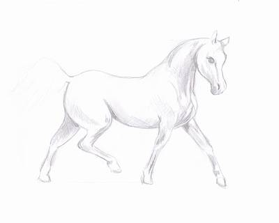 Drawing - White Horse Sketch by MM Anderson