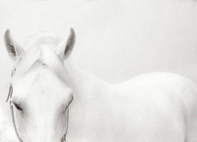 Photograph - White Horse by Stevecoleimages
