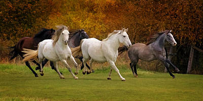 Photograph - White Horse Vale Lipizzans by Wes and Dotty Weber