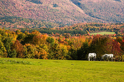 Autumn Foliage Photograph - White Horses Grazing With View Of Green Mtns by Jeff Folger