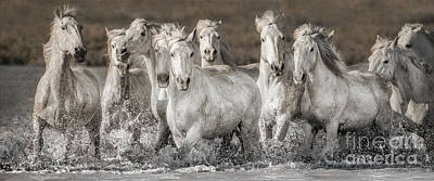 Gray Horse Photograph - White Horses by Heather Swan