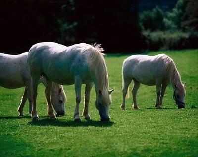 White Horses, Ireland Art Print by The Irish Image Collection