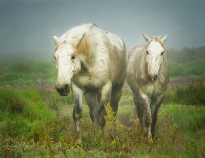 White Horses Of Camargue In Field Art Print