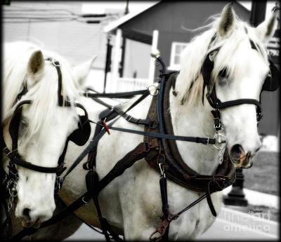 Wagon Train Digital Art - White Horses  by Steven Digman