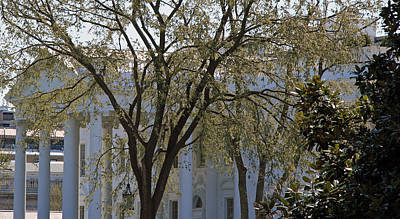 Photograph - White House Behind Trees by Cora Wandel