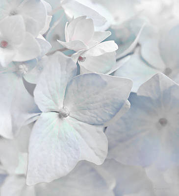 Photograph - White Hydrangea Flowers Macro by Jennie Marie Schell
