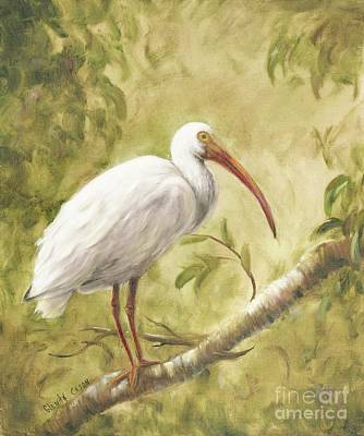Painting - White Ibis by Glenda Cason
