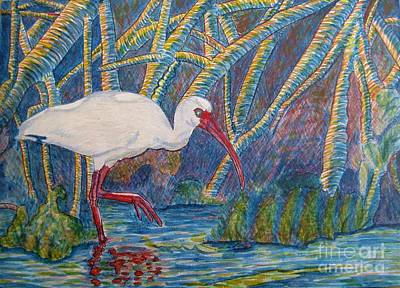 White Ibis In The Mangroves Art Print by Judy Via-Wolff