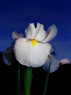 Photograph - White Iris by Alessandro Della Pietra
