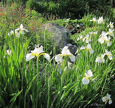 Photograph - White Iris Garden by MTBobbins Photography