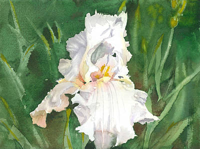 White Iris Art Print by Spencer Meagher