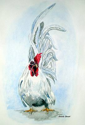White Japanese Rooster Art Print by Amanda Hukill