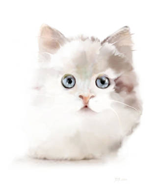 Painting - White Kitten by Bamalam  Photography