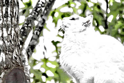 Photograph - White Kitty In Tree by Audreen Gieger